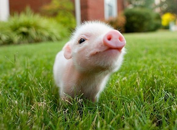 7 Adorable Animals & The Non-Profits Who Love Them  7 Adorable Animals & The Non-Profits Who Love Them  7 Adorable Animals & The Non-Profits Who Love Them