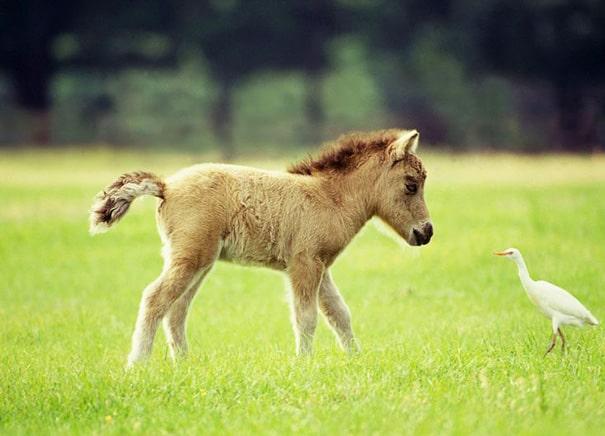 7 Adorable Animals & The Non-Profits Who Love Them