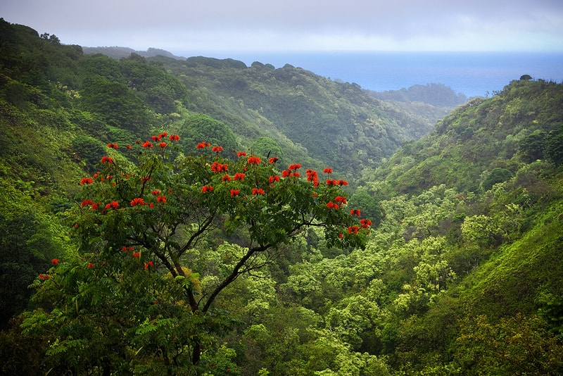 5 Things You Must See and Do On Your Hawaii #GoodEscape