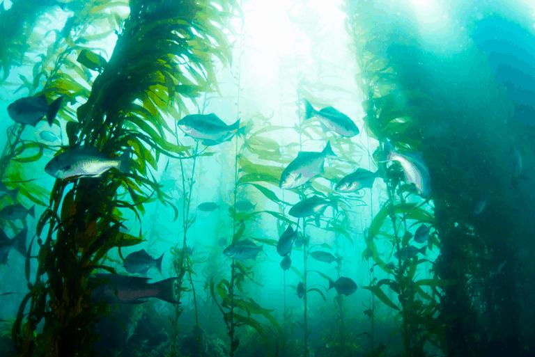 картинки стоки рыбы только том, насколько