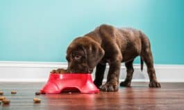Top Foods for Dogs with Sensitive Tummies