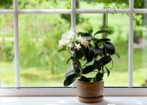 The Top Plants (and Planters) to Make Your Home Healthier