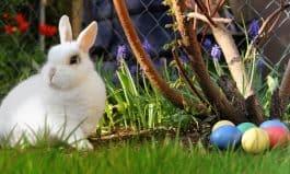 Save Money on Easter Celebrations