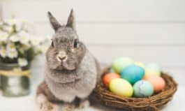 Save Money on Easter Celebrations