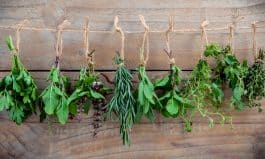 Easy to Grow Herbs for Fresh Spring Drinks